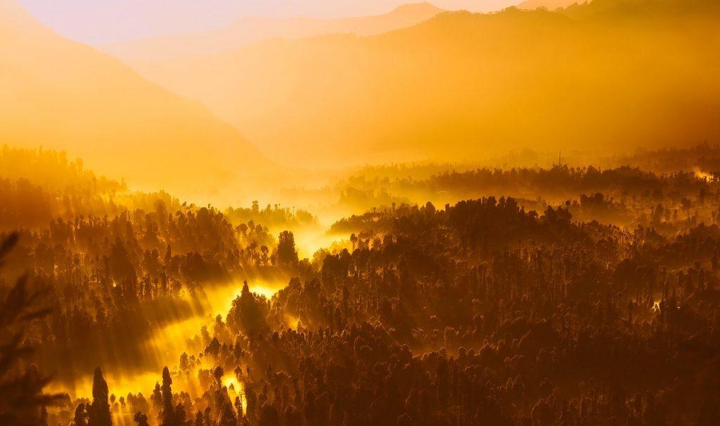 Las zonas tropicales, los principales focos de enfermedad
