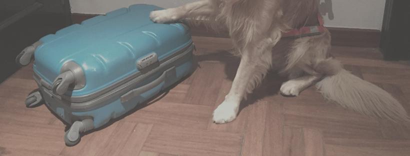 Cuando un perro viaja, también necesita su equipaje :)