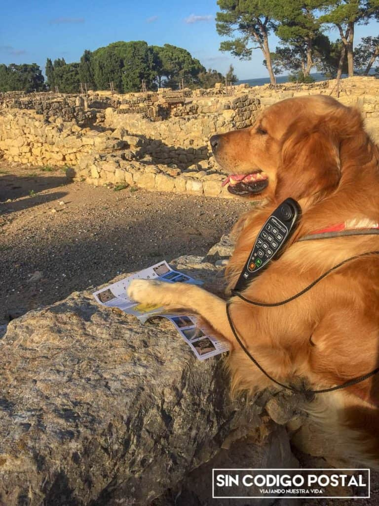 Los perros pueden entrar al yacimiento de ampurias y de Ullastret
