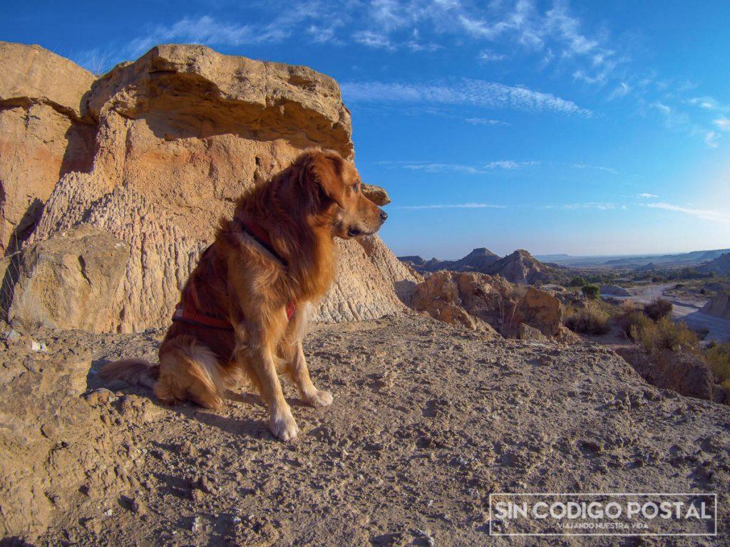 Ir al desierto de los Monegros con perros