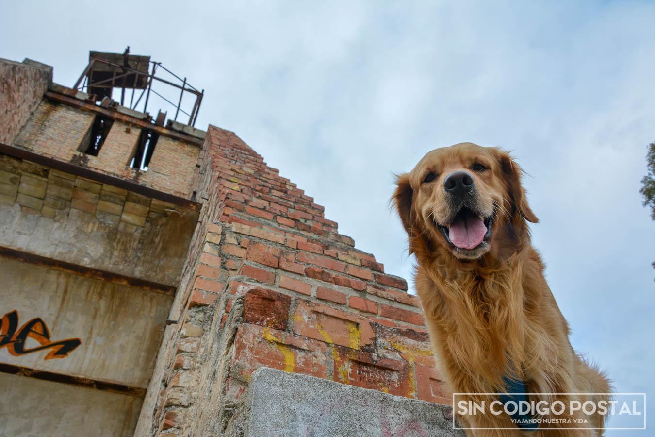 Cuzco en las escaleras de una mina
