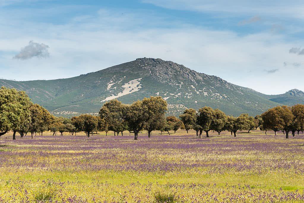Imagen de los montes de Toledo. Fuente:Wikipedia