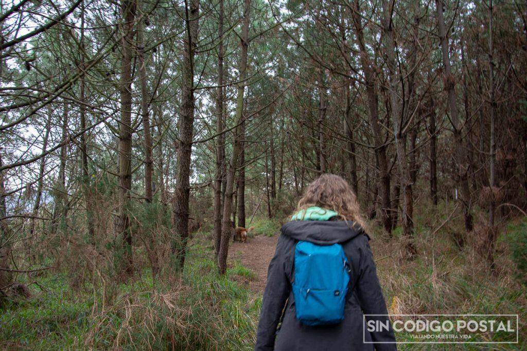 Zona de pinos de la ruta