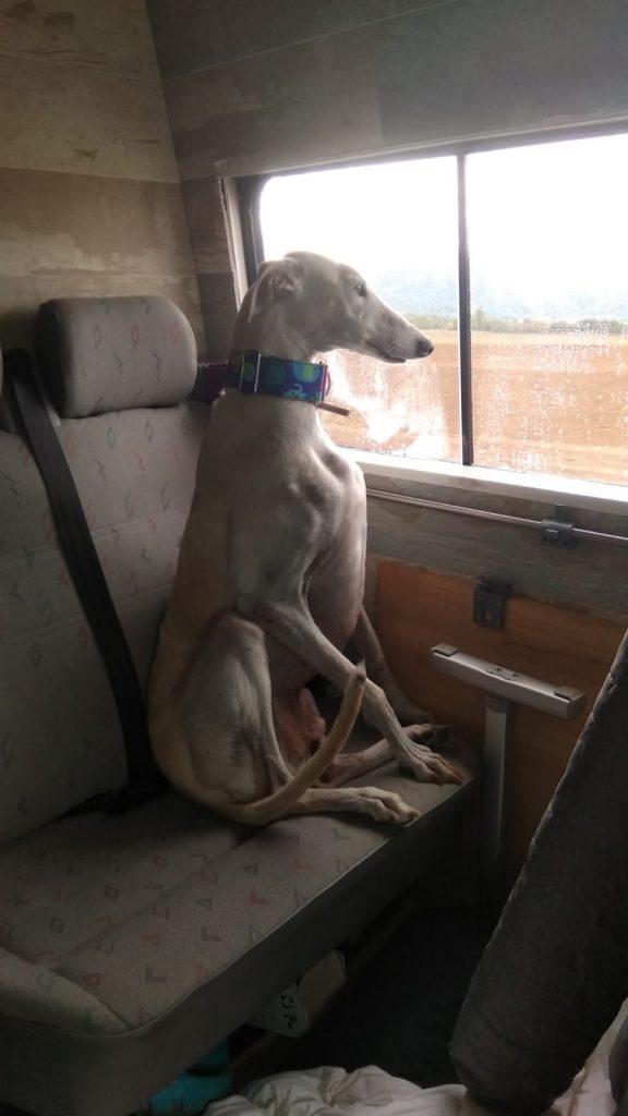 Kunh ocupando su asiento :)