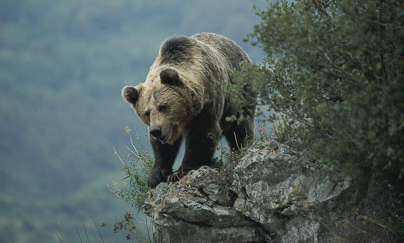 Ver osos en Somiedo