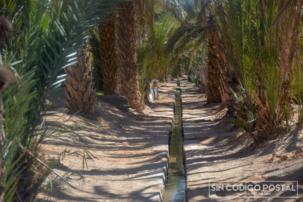 Plantaciones de Regadío en el desierto