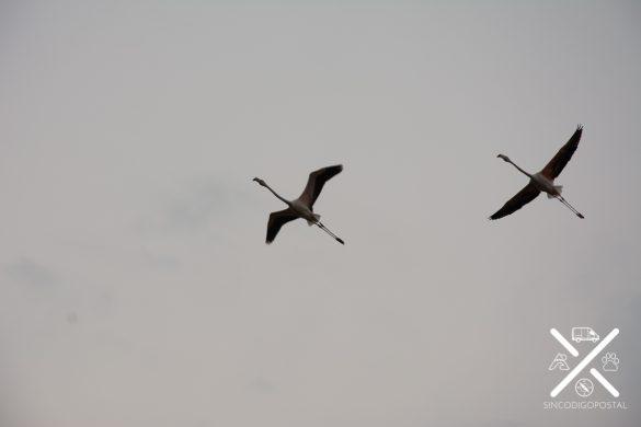 Avistamiento de Aves en la Camargue