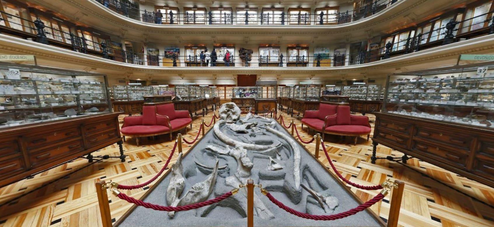Fósiles en el Museo Geominero