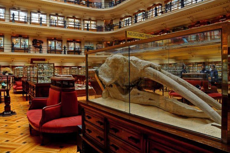 Fósiles que le encantaran a los más pequeños en el Museo Geominero de Madrid