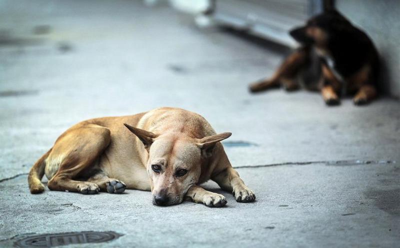 Perros callejeros en Bosnia