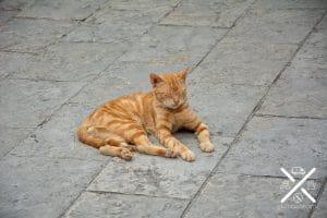 Kotor esta llena de gatos muy buenos