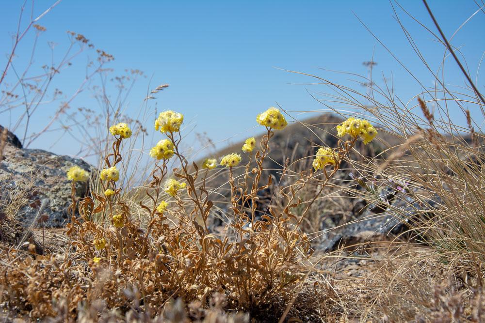 La flora en la parte más alta del Volcán