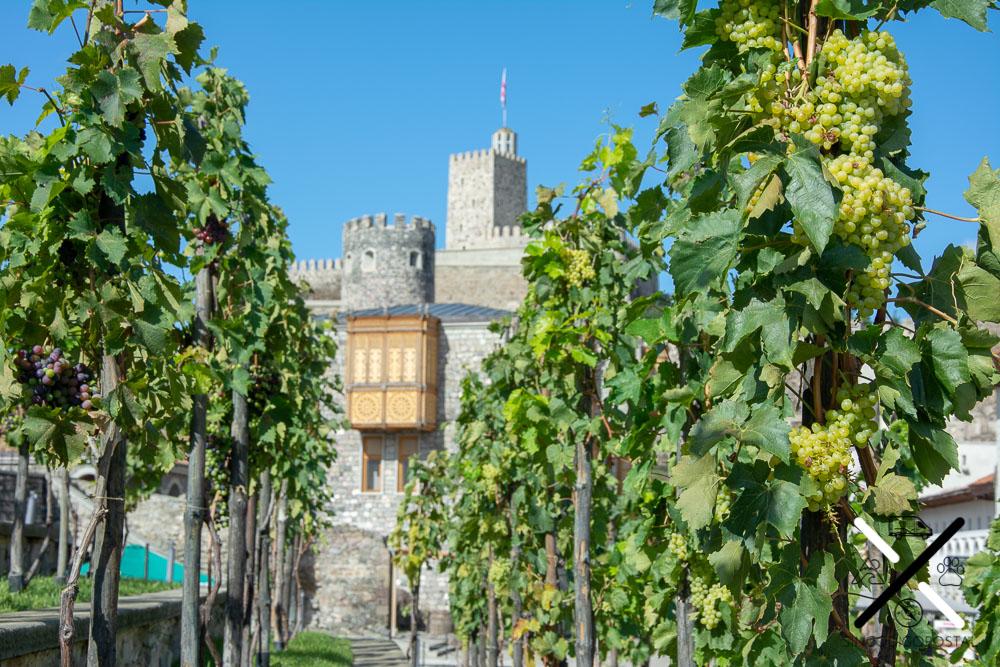 Viñedos del Castillo de Rabati