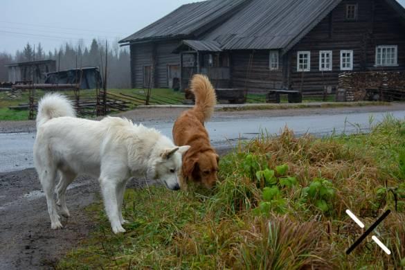 Cuzco jugando en Rusia con su nuevo amigo