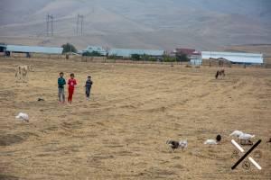 Niños pastoreando vacas y pavos en Azerbaiyán