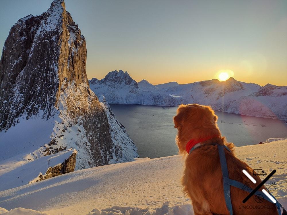 Isla de Senja con perro