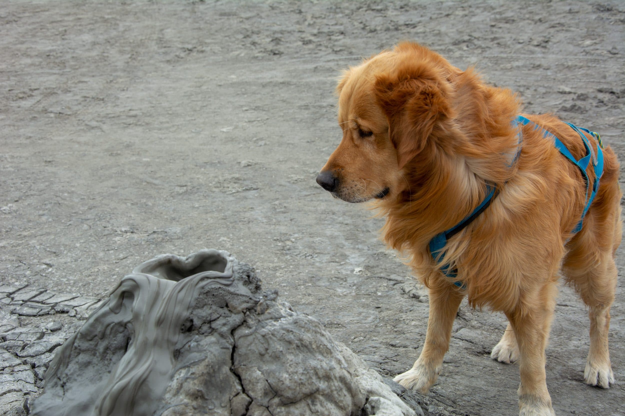 Visitar Azerbaiyán con perro