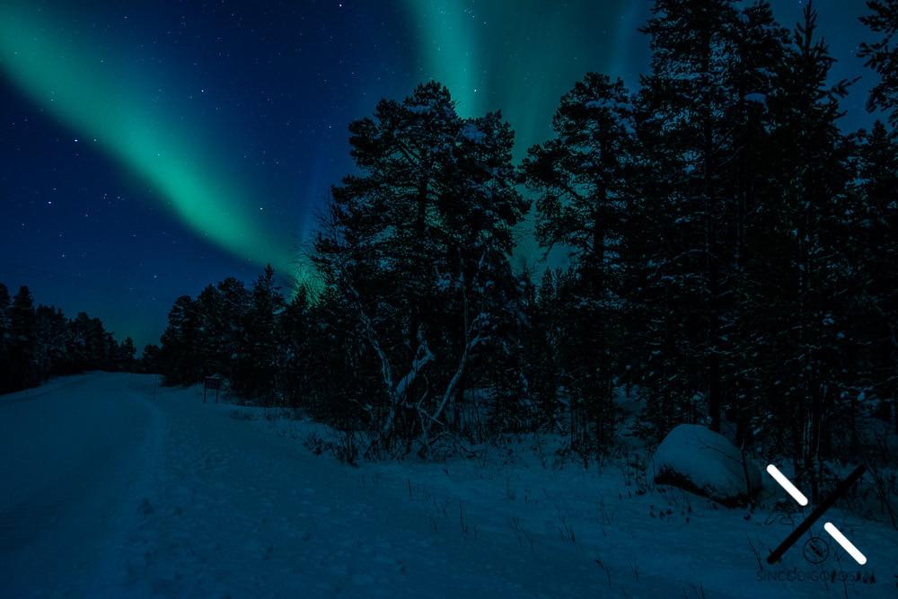 En la Laponia un elemento de todas las fotografías suelen ser los árboles tan característicos de la zona