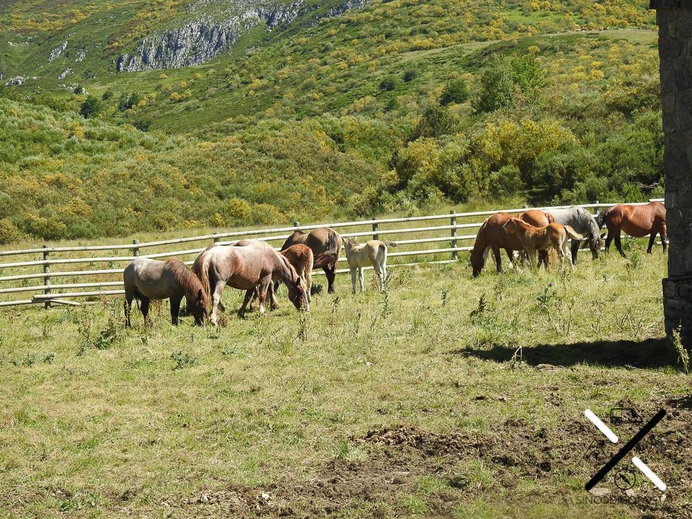 Caballos en la ruta hacia el nacimiento del Río Esla