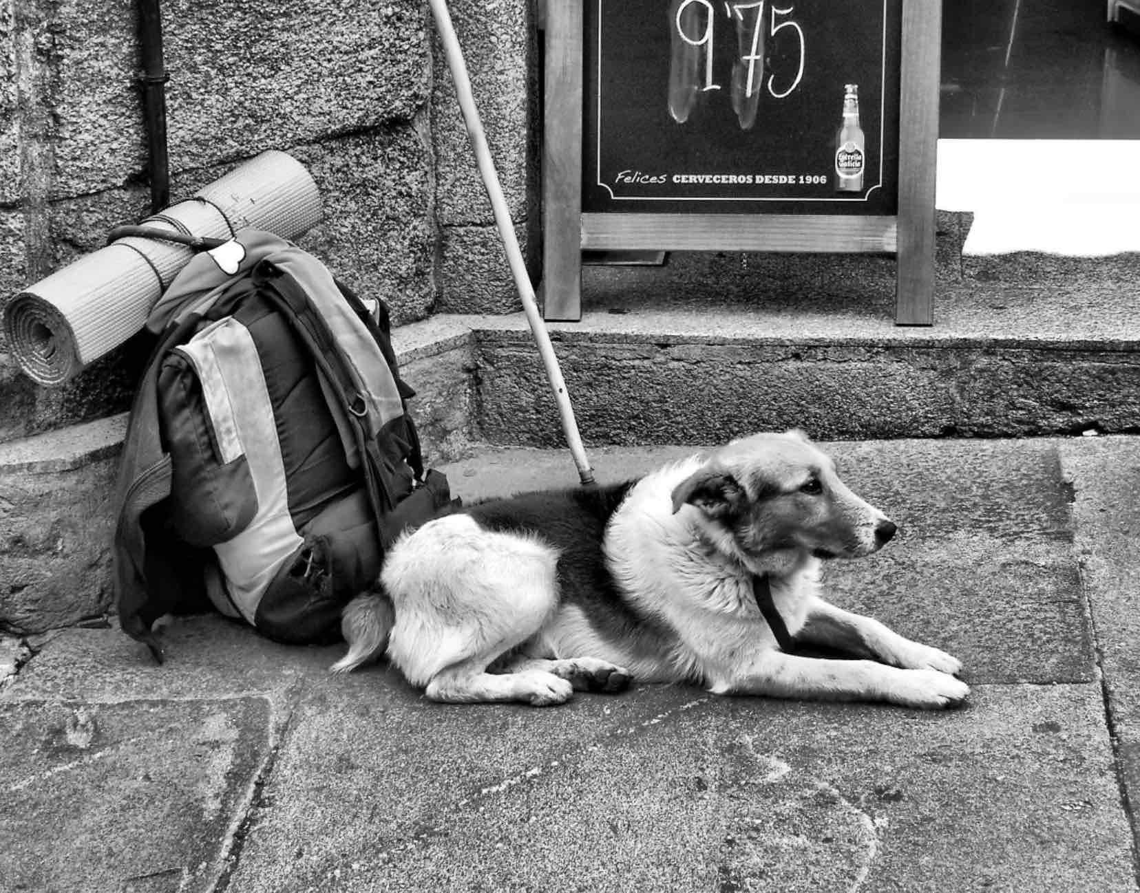 Camino de Santiago con tu perro. foto. Jose Luis Cernadas Iglesias