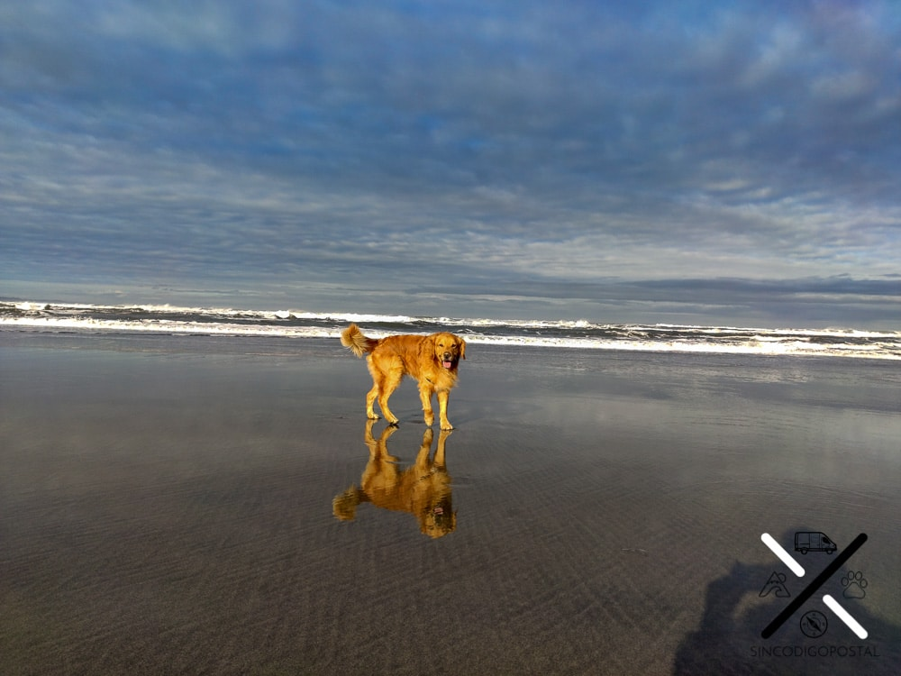 Playa para perros Asturias