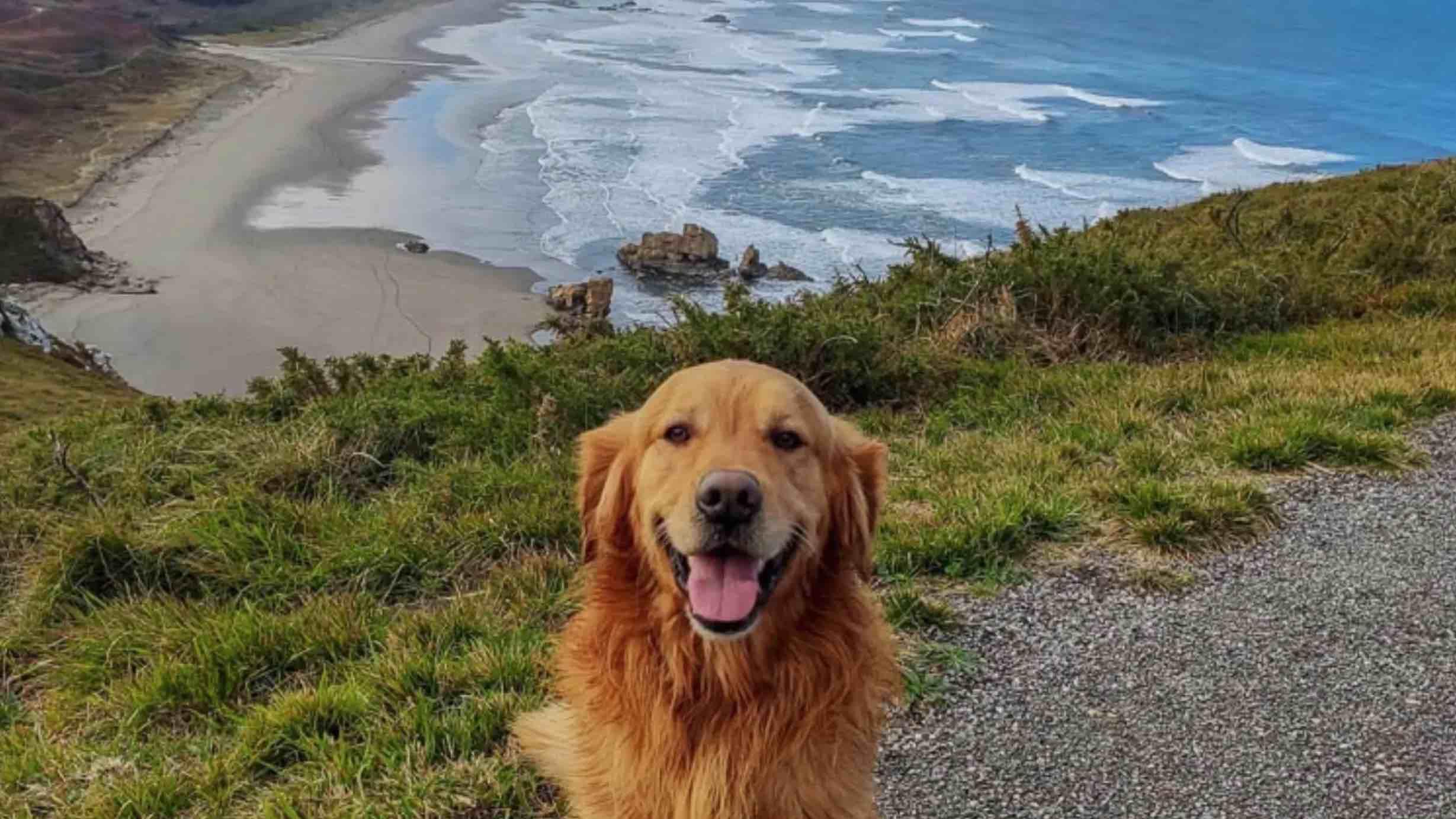 Playas Asturias para perros