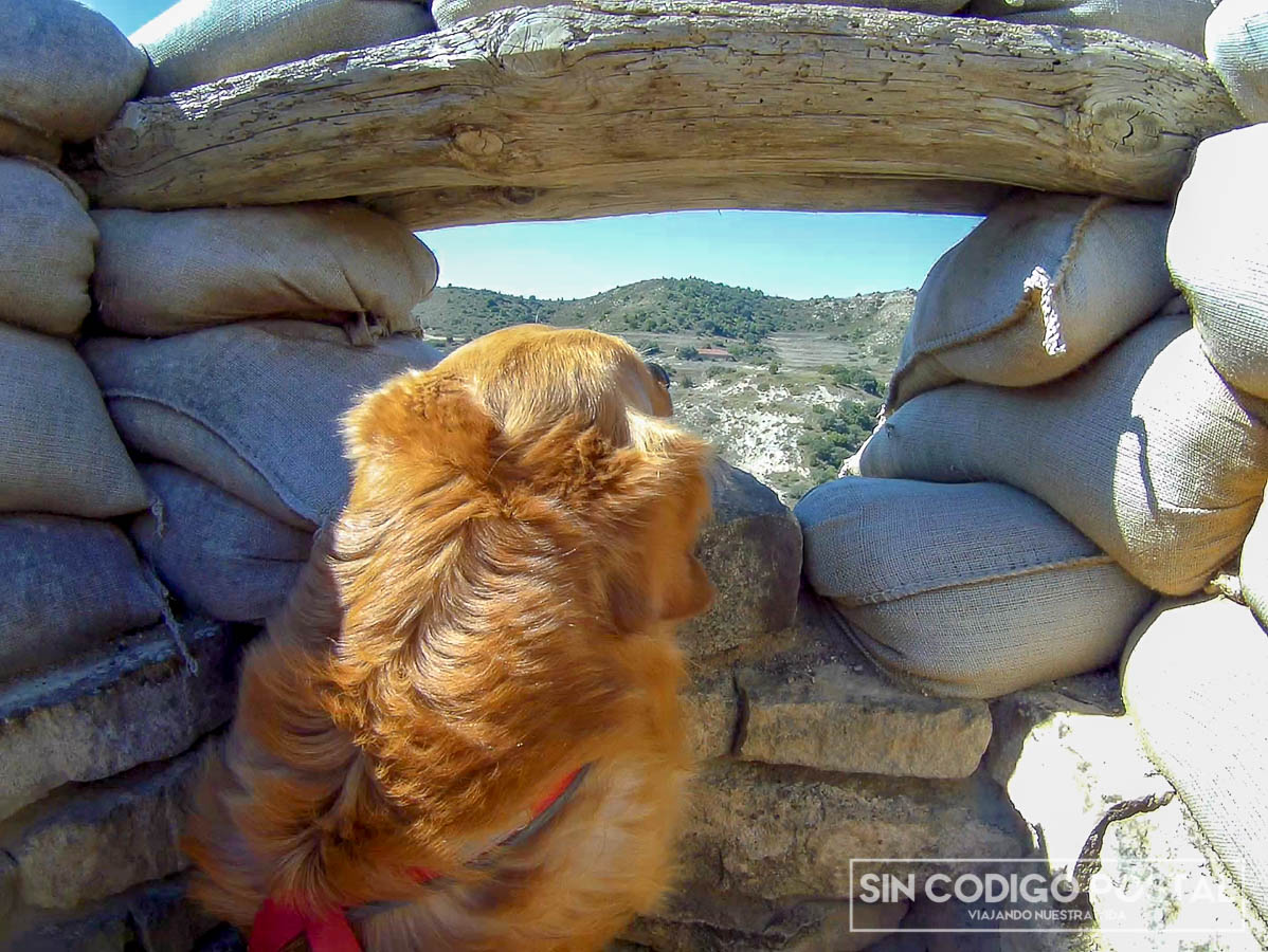 desierto monegros perro trinchera