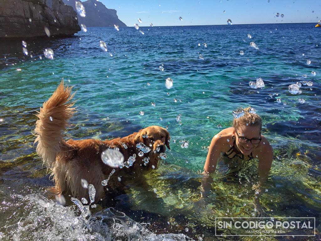 playa admiten perros