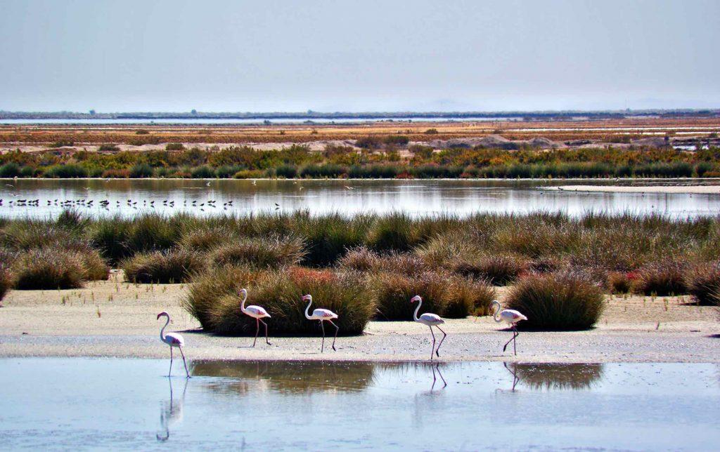 Parque Natural de Doñana en autocaravana